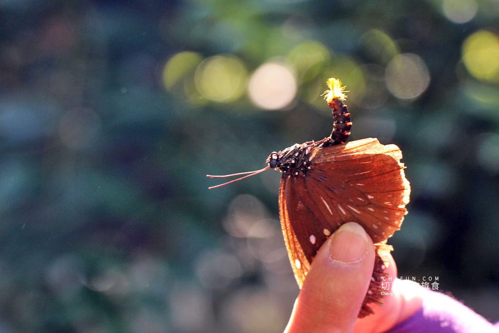 20191210020350_75 彰化|社頭一日遊清水樂活小旅行,自然生態與鐵道迷必朝聖之地