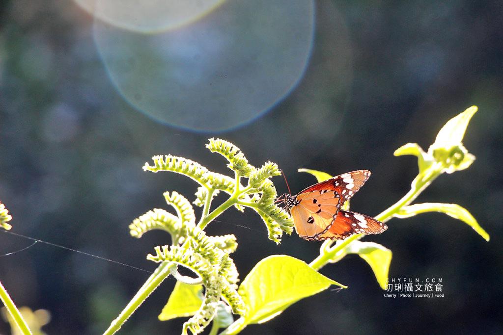20191210020353_81 彰化|社頭一日遊清水樂活小旅行,自然生態與鐵道迷必朝聖之地